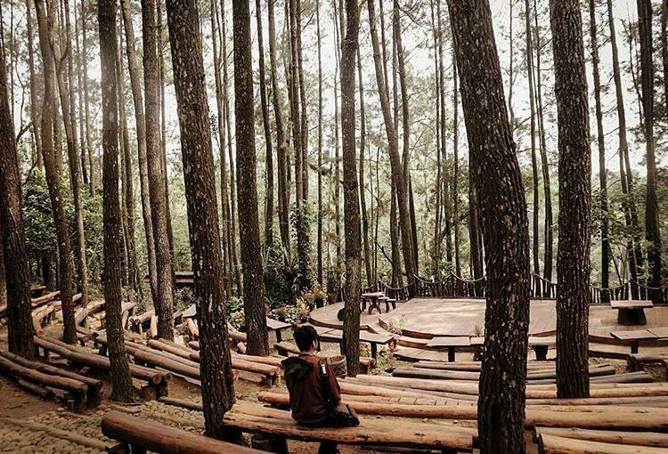 Informasi Terkait Wisata Jogja Hutan Pinus Mangunan