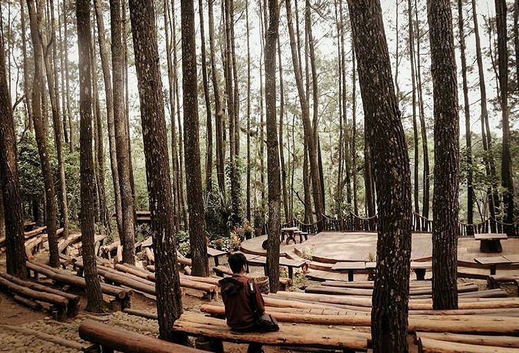 Wisata hutan pinus Mangunan Bantul Yogyakarta, sumber ig @hasandipta